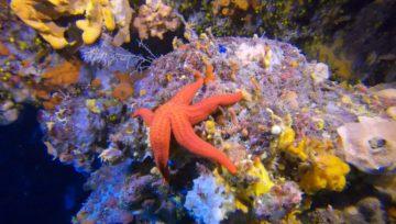 Rozgwiazdy - Starfishes, Sea stars, Asteroids